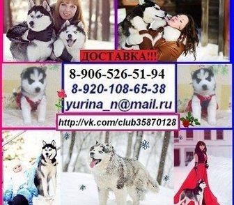 Фото в Собаки и щенки Продажа собак, щенков Недорого щенков голубоглазых черно-белого в Москве 0