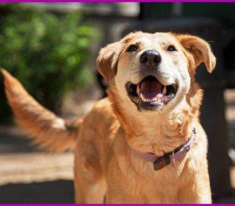 Фото в Собаки и щенки Продажа собак, щенков Фокси - молодая девочка, ей около двух лет. в Москве 0