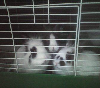 Изображение в Домашние животные Грызуны Продам декоративных кроликов (7-месячные). в Москве 2000