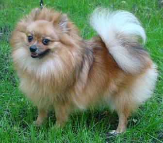 Фото в Собаки и щенки Продажа собак, щенков Предлагается в качестве домашнего любимца в Москве 15000