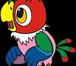 Фотография в Домашние животные Птички Приму в дар средних и крупных попугаев . в Москве 0