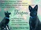 Фотография в Собаки и щенки Продажа собак, щенков МУРМАНСК и МУРМАНСКАЯ ОБЛАСТЬ.   Нежный щенок в Мурманске 0