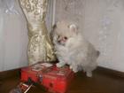Фотки и картинки  смотреть в Мурманске