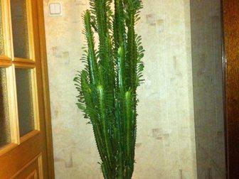 Скачать бесплатно фото Растения Продам комнатное растение 33201240 в Мурманске