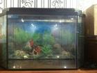 Скачать бесплатно foto Аквариумы продам аквариум на 50 литров 66600472 в Муроме