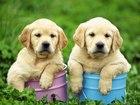 Свежее фото Услуги для животных Дрессировка собак в Заинске 35093474 в Набережных Челнах