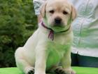 Фотография в Домашние животные Услуги для животных Дрессировка собак в группе на площадке в в Набережных Челнах 1600