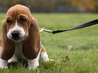 Уникальное фото Услуги для животных Услуги зоопсихолога 38301395 в Набережных Челнах