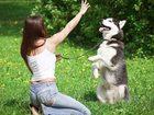 Новое изображение Услуги для животных Дрессировка собак в г, Елабуга 38301429 в Набережных Челнах