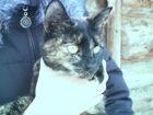 Просмотреть foto Транспортные грузоперевозки Трехцветные кошка и котята ищут добрых хозяев 50043223 в Набережных Челнах