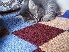 Изображение в Отдам даром - Приму в дар Отдам даром Отдам даром ласковых котят, к туалету приучены, в Нерюнгри 0