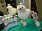 Изображение в Собаки и щенки Стрижка собак Стрижка собак всех пород, кошек, тримминг, в Нижнем Новгороде 0