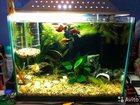 Изображение в Рыбки (Аквариумистика) Купить аквариум В связи с покупкой нового неспешно (минимум в Нижнем Новгороде 1500