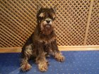 Скачать бесплатно изображение Потери Потерялась собака 33935055 в Нижнем Новгороде