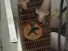 Скачать бесплатно foto Разное Поросята месячные 37347522 в Нижнем Новгороде