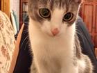 Изображение в  Отдам даром - приму в дар кошка Тася, полтора года, стерилизованная, в Нижнем Новгороде 0