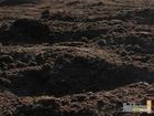 Смотреть фото Ландшафтный дизайн Чернозем в мешках и валом 56059607 в Нижнем Новгороде