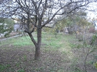Скачать фотографию  Продаю сад г, Балахна д, Ваняты 62463488 в Нижнем Новгороде