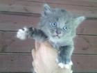Уникальное фотографию  Чудесный котёнок ищет друга 66430706 в Нижнем Новгороде
