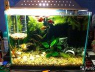 Продам аквариум В связи с покупкой нового неспешно (минимум до октября) продам а