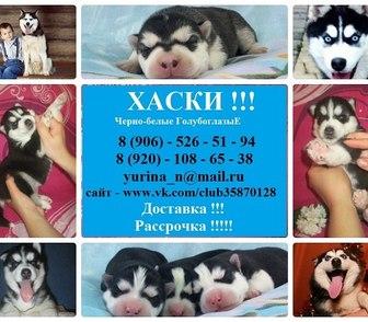 Изображение в Собаки и щенки Продажа собак, щенков ХАСКИ чистокровных щеночков разных окрасов в Нижнем Новгороде 0