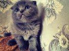Скачать бесплатно изображение Кошки и котята Продается кошечка вислоухая 32549274 в Нижнем Тагиле