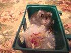 Свежее фотографию Грызуны Продам хомячка с клеткой 33942056 в Нижнем Тагиле