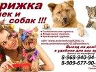 Изображение в Домашние животные Разное Предлагаем к вашему Вниманию! свои услуги в Ногинске 100