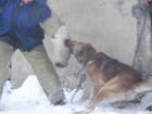 Изображение в   Обучение собак по прикладному направлению, в Новокузнецке 0