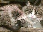 Кошечка трехмесячная