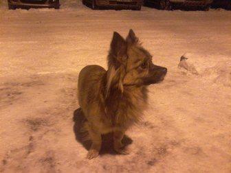 Увидеть фото Находки Найдена собака 32405799 в Новокузнецке