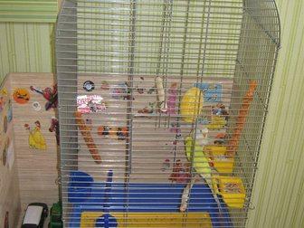Просмотреть изображение  Попугаи с клеткой 32530904 в Новокузнецке