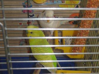 Скачать бесплатно foto  Попугаи с клеткой 32530904 в Новокузнецке