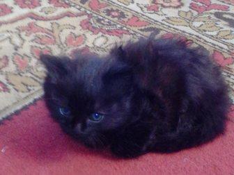 Смотреть фото Отдам даром Отдам в хорошие руки котят 33258728 в Новокузнецке