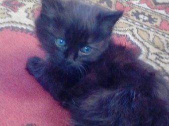 Смотреть фотографию Отдам даром Отдам в хорошие руки котят 33258728 в Новокузнецке