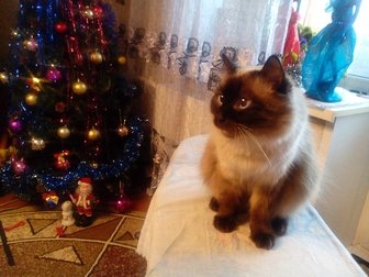 Смотреть изображение Отдам даром - приму в дар отдам даром 34385767 в Новокузнецке