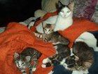 Скачать foto  Отдам котят 32612215 в Новороссийске