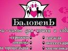Новое фото  Профессиональная стрижка собак и кошек в Новороссийске 33989171 в Новороссийске