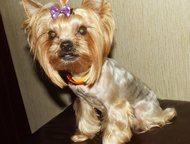 Стрижка собак в Новороссийске Мастер-грумер, Аттестованный президентом Европейск