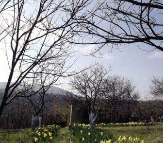 Фотография в Недвижимость Земельные участки Продается дачный участок в Новороссийске в Новороссийске 550000