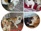 Фото в Домашние животные Услуги для животных Мы с радостью позаботимся о Вашем животном в Новосибирске 0