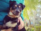 Фото в   Найдена собака 11. 10. 15 на улице Кропоткина. в Новосибирске 0