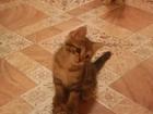 Изображение в   Отдам в хорошие руки котенка, девочку, бесплатно. в Новосибирске 0