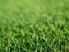 Скачать бесплатно foto Ландшафтный дизайн Подготовка почвы для газона 37460764 в Новосибирске