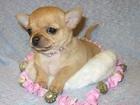 Фото в Собаки и щенки Продажа собак, щенков Мальчики и девочки. Цены разные. Есть щенки в Новосибирске 7000