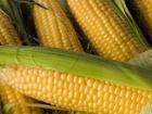 Изображение в Прочее,  разное Разное Замороженная кукуруза оптом и в розницу. в Новосибирске 1500