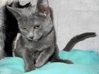 Изображение в Кошки и котята Продажа кошек и котят Зовут Нюша. Возраст 6 мес. , ласковая, спокойная, в Новосибирске 0
