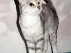 Фотография в Кошки и котята Продажа кошек и котят Отдам кошечку в добрые руки.   Зовут Бэлла, в Новосибирске 0