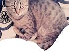 Увидеть фото Потерянные Потерялась кошка 39075281 в Новосибирске