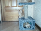 Фото в Кошки и котята Продажа кошек и котят Остались самые красивая пара, мальчик и девочка! в Новосибирске 5000